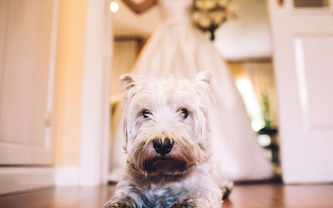 10 ways to include your dog in your wedding